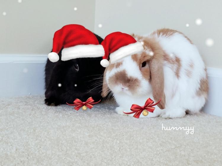 ::FRIYAY:: Hunnyy's bunnies!!