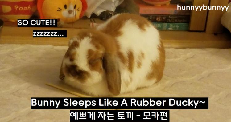::YOUTUBE:: NEW VIDEO- Adorable bunny sleeping!